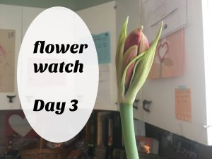 Our flower's journey.... come along each day to see her debut!