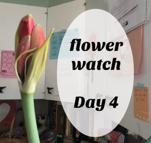 Day 4 of the unfolding of our mystery flower! Join us each day at www.jennyhalldesign.com until we at last see her in full bloom.